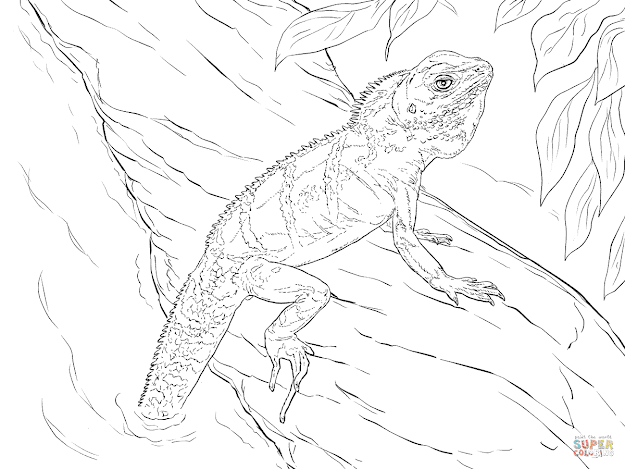Click The Realistic Chinese Water Dragon Coloring Pages