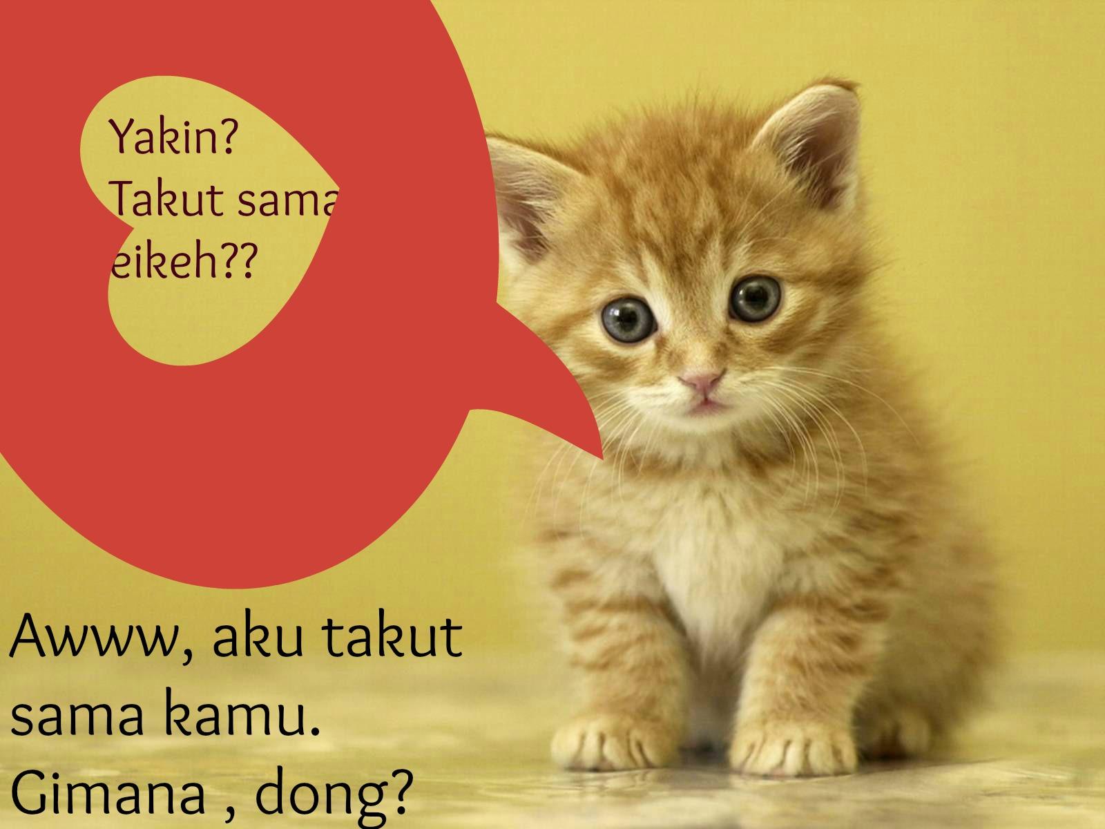 Takut Kucing Uwien Budi
