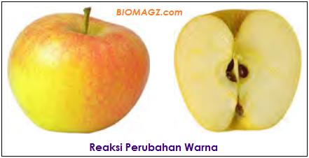 contoh ciri reaksi perubahan warna pada apel
