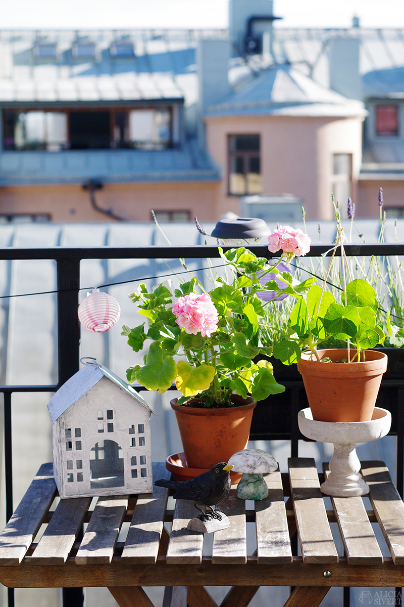 aliciasivert alicia sivert sivertsson odla på balkong balkongodling odling trädgård inspiration inreda inredning kruka krukor det norske hageselskap hage på balkongen mårbackapelargon pelargon mårbacka krasse ljuslykta hus
