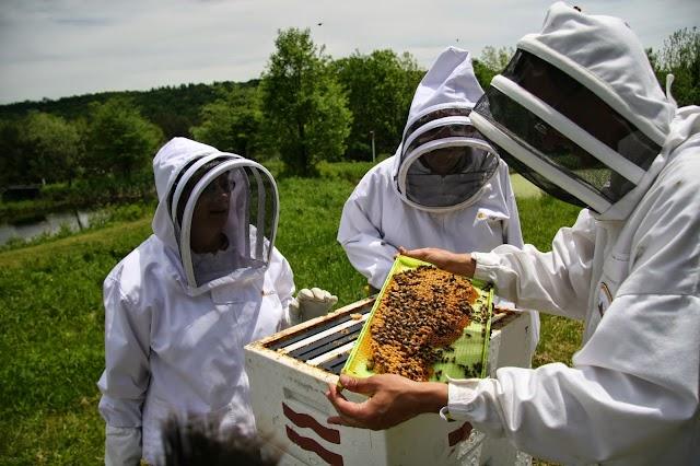 Τα θανάσημα λάθη των νέων μελισσοκόμων