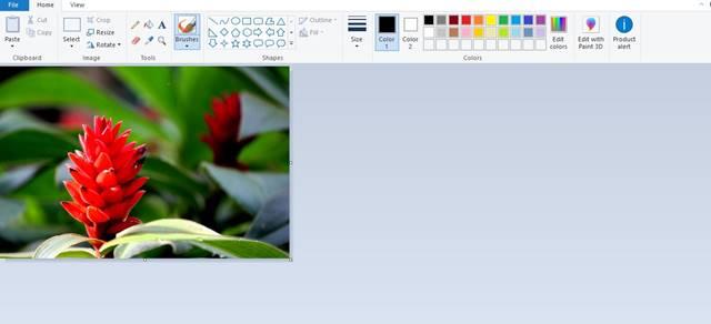 Cara Melakukan Cropping Menggunakan MS Paint