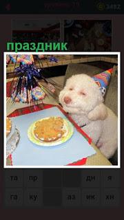 за столом сидит собака в колпаке, для неё устроен праздник