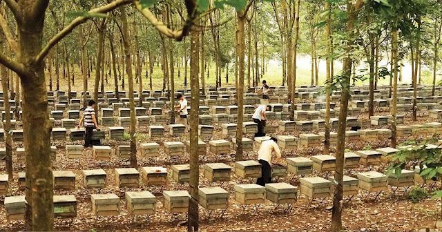 trại nuôi ong ở daklak