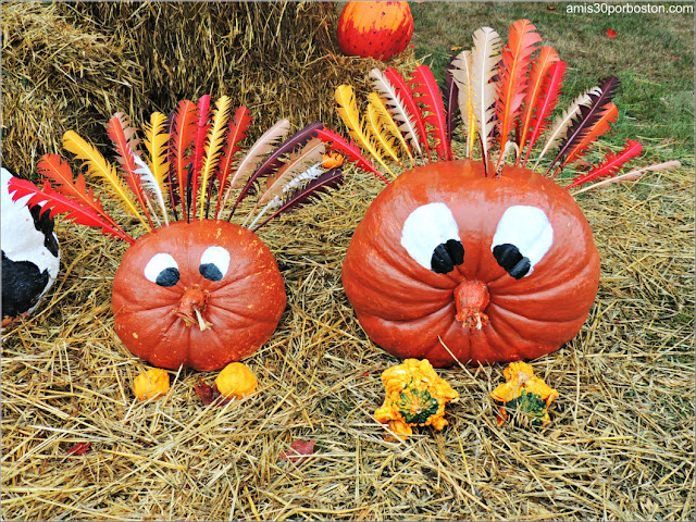 Calabazas Decoradas para Halloween: Pavos