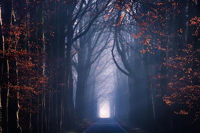 Precioso camino rodeado por arboles