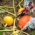 Gute und schlechte Nachbarn im Gemüsegarten
