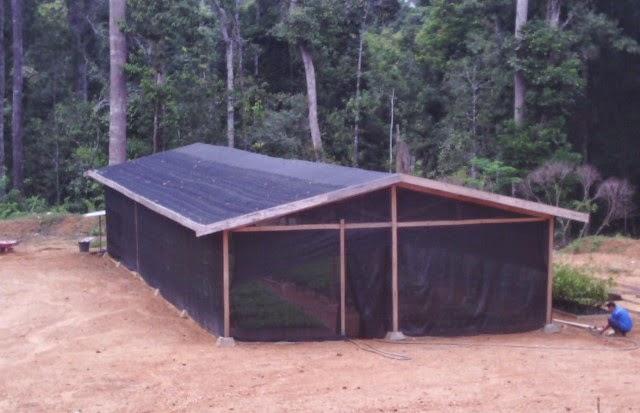 green house sederhana