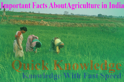 Important Facts About Agriculture In India