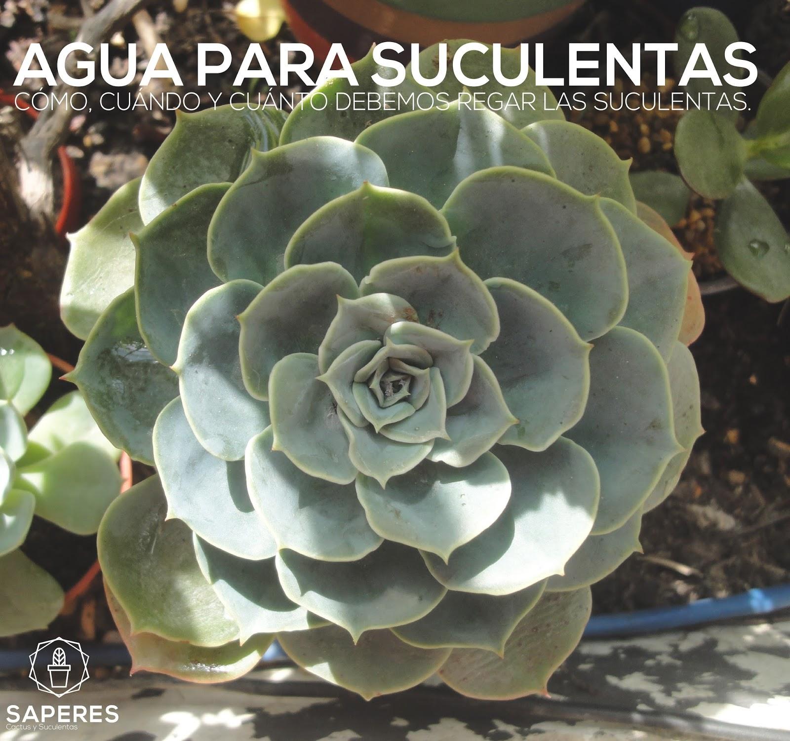 Agua para suculentas saperes - Enfermedades de las plantas de interior ...