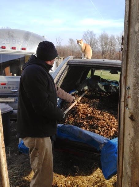 Mojo supervises Papa unloading woodchips