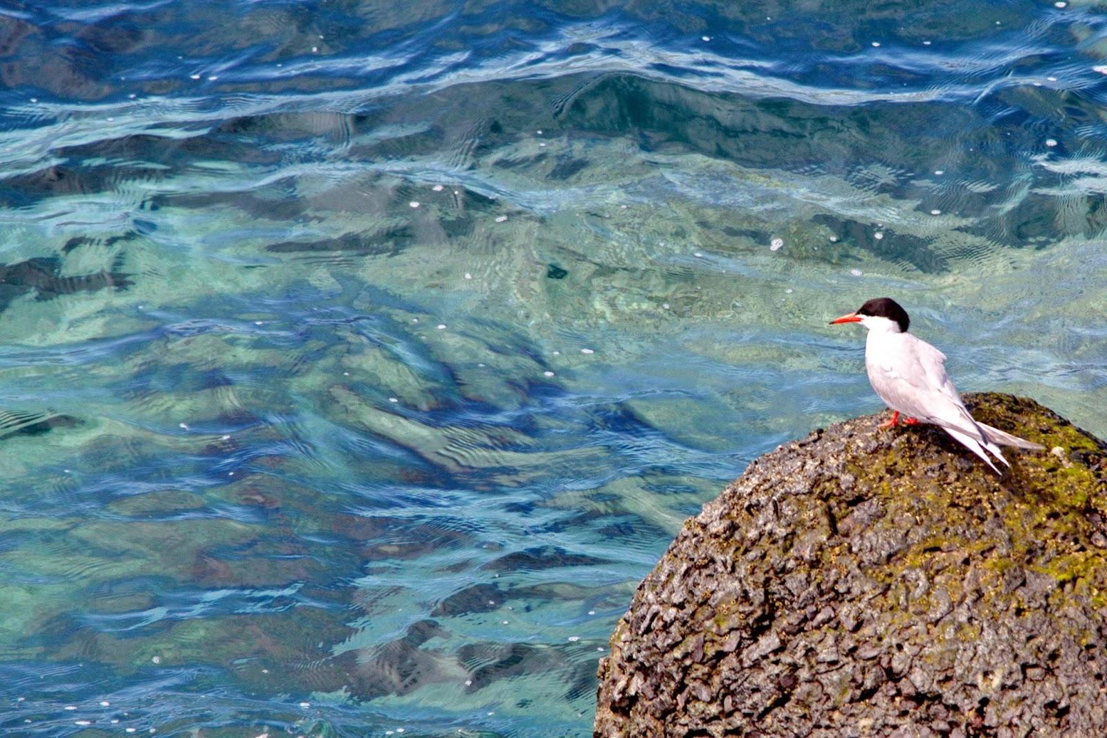 a ave e o mar