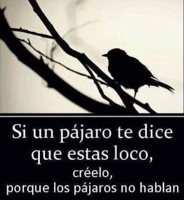 Si un pájaro te dice que estás loco , créelo, porque los pájaros no hablan
