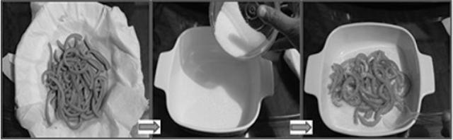 Proses Pembuatan Manisan Kulit Jeruk 15-17
