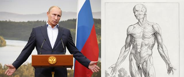 Владимир Путин (Vladimir Putin) in pose similar to 'Tertia musculorum tabula' medical anatomy drawing