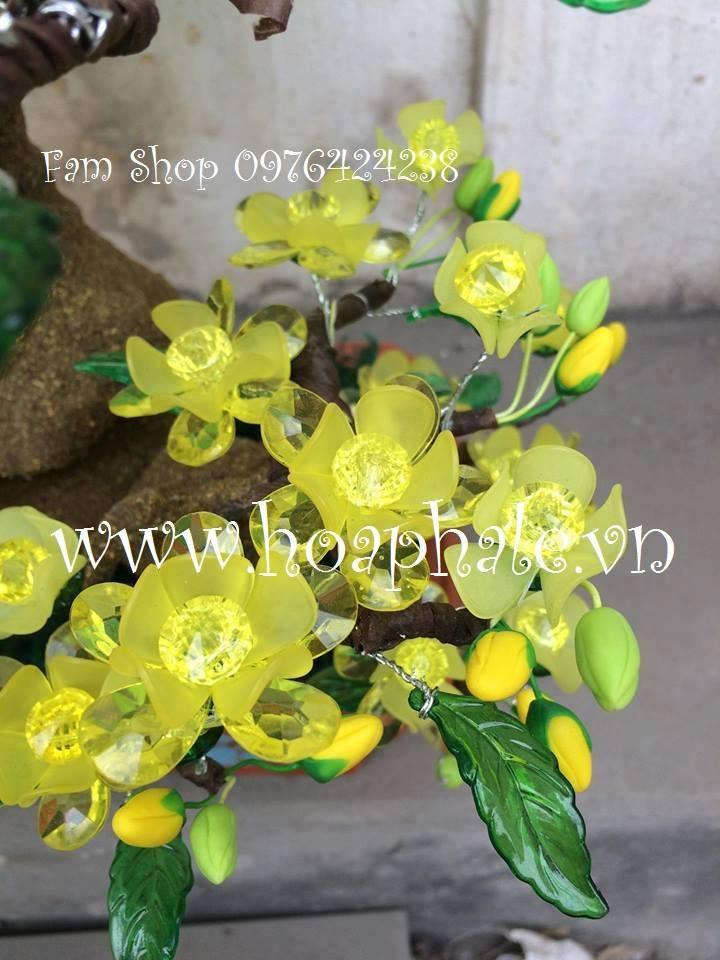 Canh hoa mai lam goc bonsai mai dao o Tue Tinh