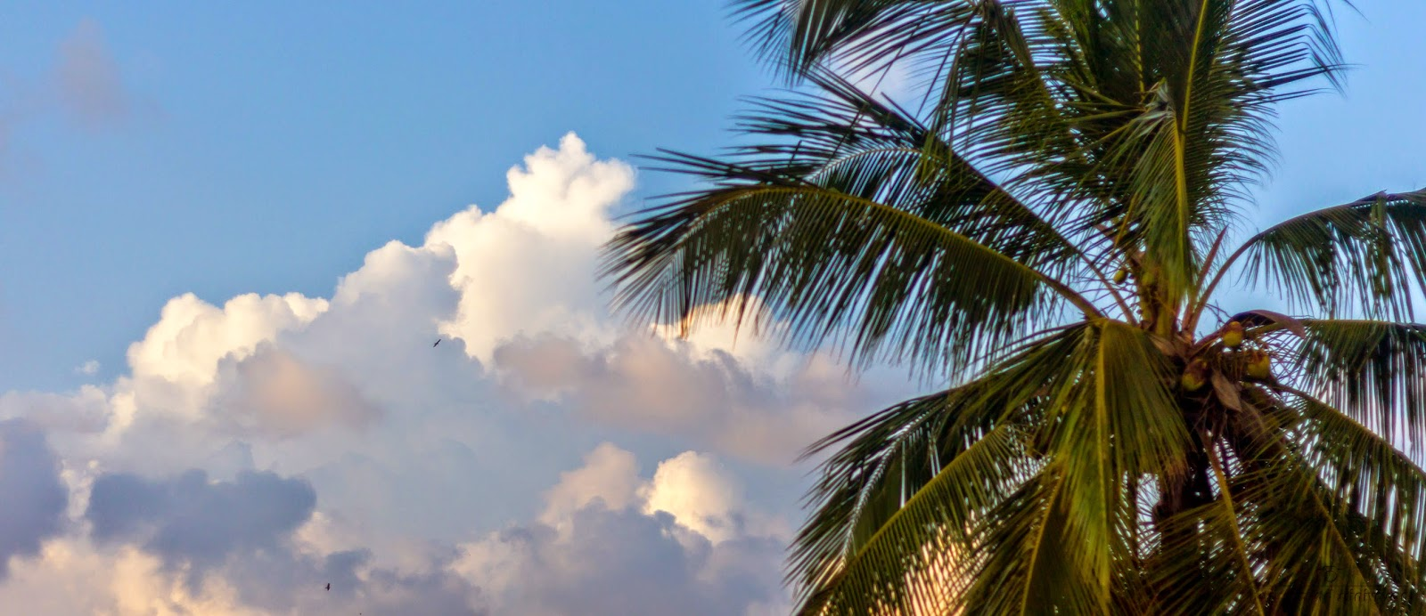 Cloud formation with coconut tree