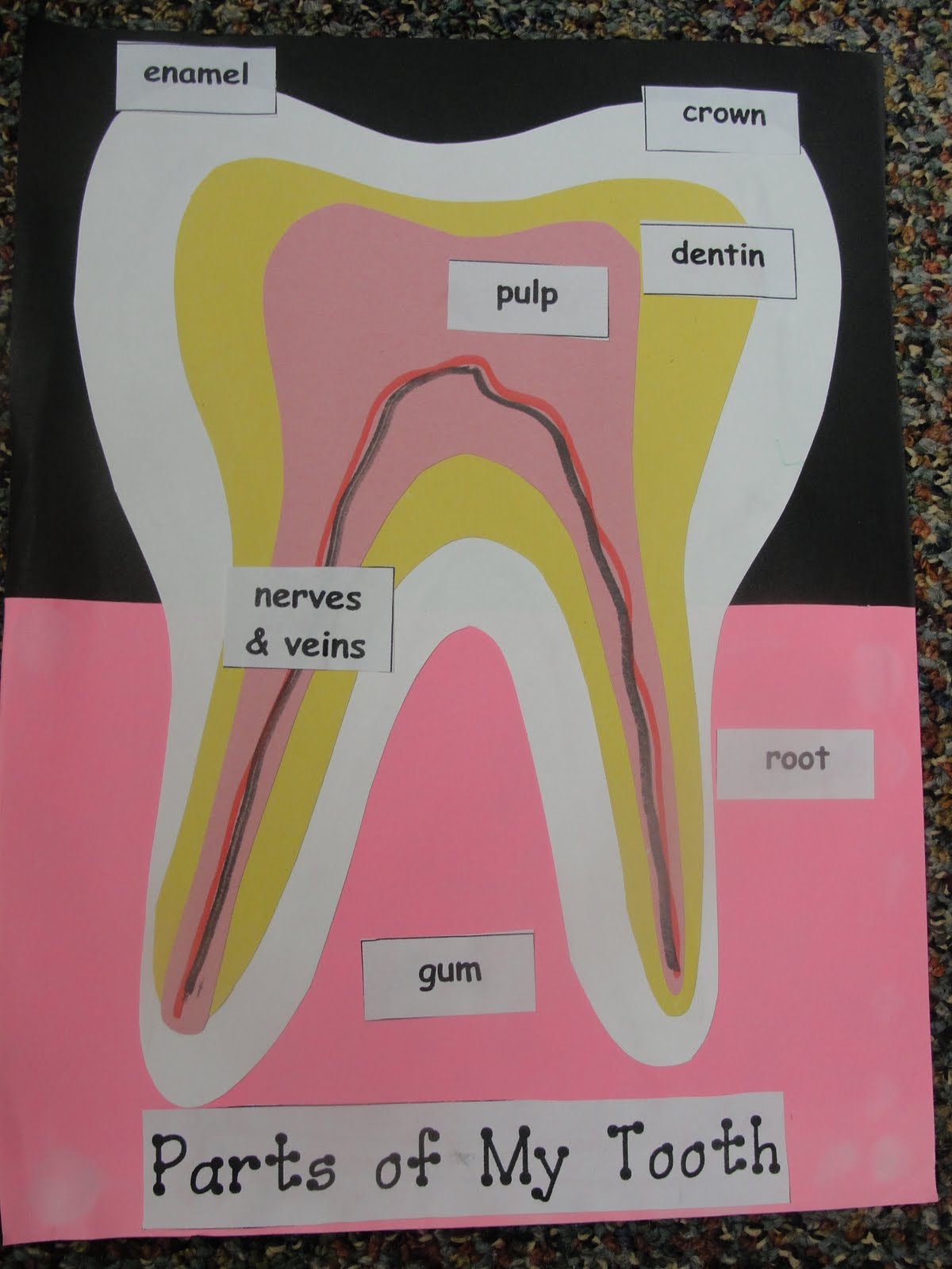 diagram of human anatomy head and neck diagram of tooth anatomy step into 2nd grade with mrs. lemons: random...
