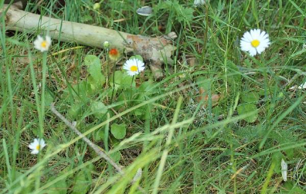 25 gram neas y flores silvestres para identificar guia - Plantas de jardin nombres ...