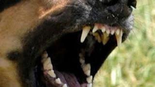 Σοκ στην Πτολεμαΐδα: Σκύλος επιτέθηκε και δάγκωσε 10χρονο στην κεντρική πλατεία (video)