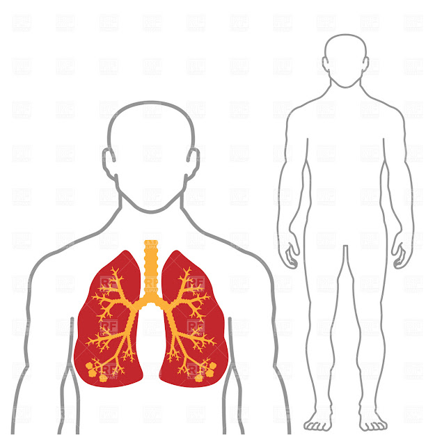 Lungs And Human Body Click To Zoom