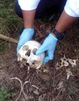 Polisi melakukan evakuasi atas penemuan tulang belulang di perkebunan uta Padang Dusun VI, Desa Karya Ambalutu, Kecamatan Buntu Pane, Kabupaten Asahan.