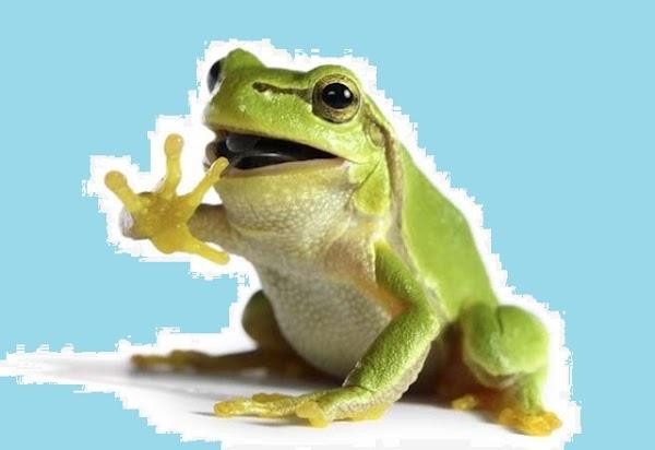 Apa Ciri-Ciri Kelompok Amphibia dan Sebutkan Contoh & Pengelompokannya