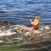 Pastor evangélico morre afogado ao tentar imitar passagem bíblica onde Jesus caminha sobre as águas