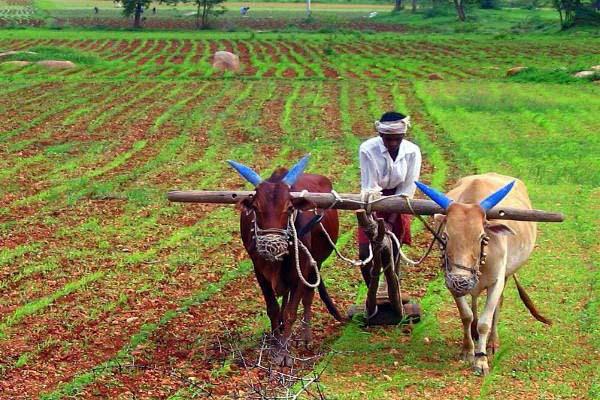 छत्तीसगढ़ राज्य के बजट में खुला किसानों के लिये पिटारा