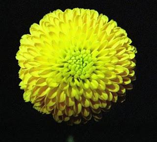 Imagenes de Amor, Flores Amarillas, parte 2