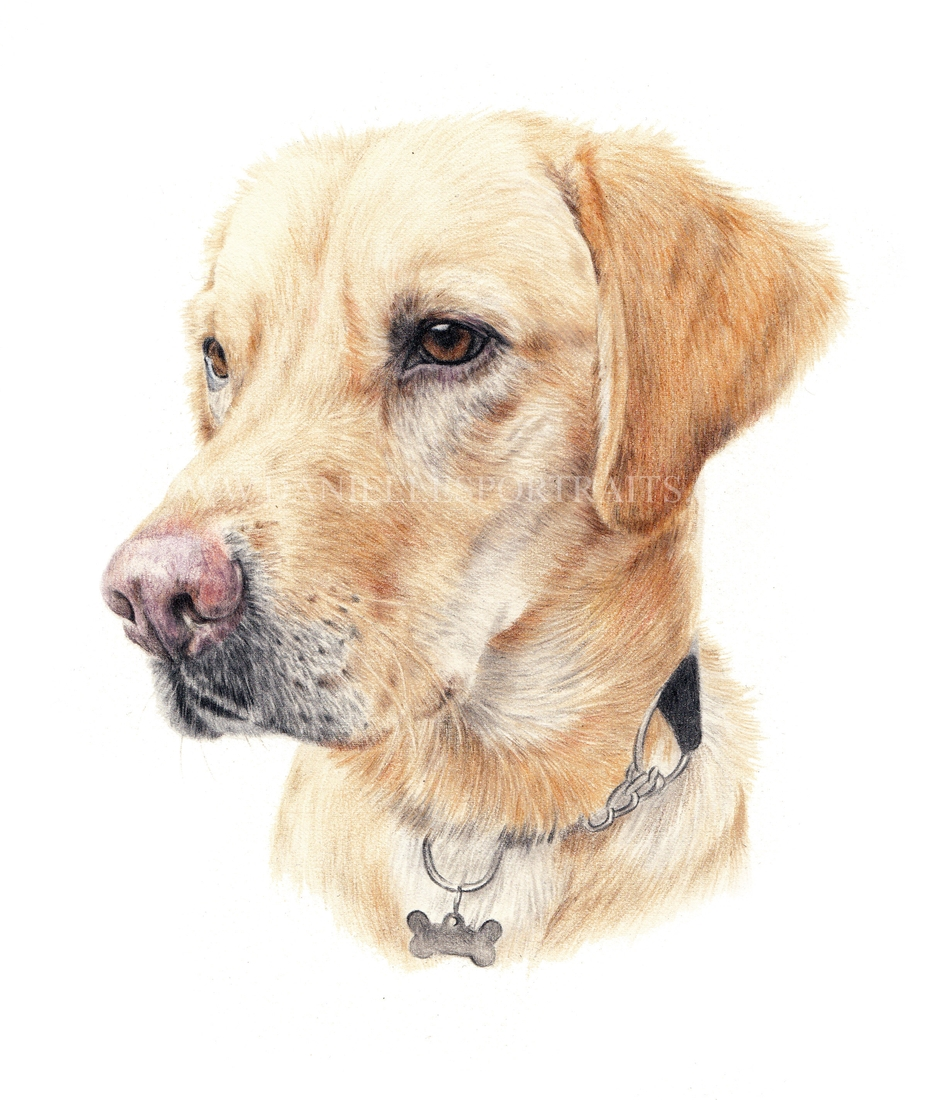 04-Rolo-Danielle-Fisher-Realistic-Pet-and-Wildlife-Portraits-www-designstack-co