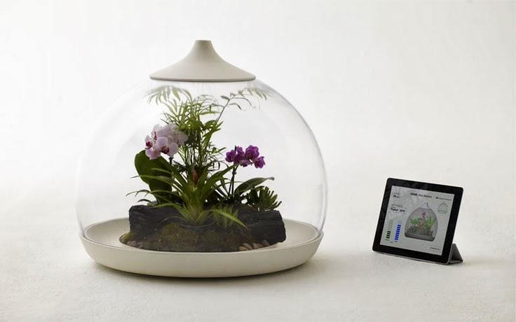 Je Reve De Terrariums De Reve Pour Mes Orchidees