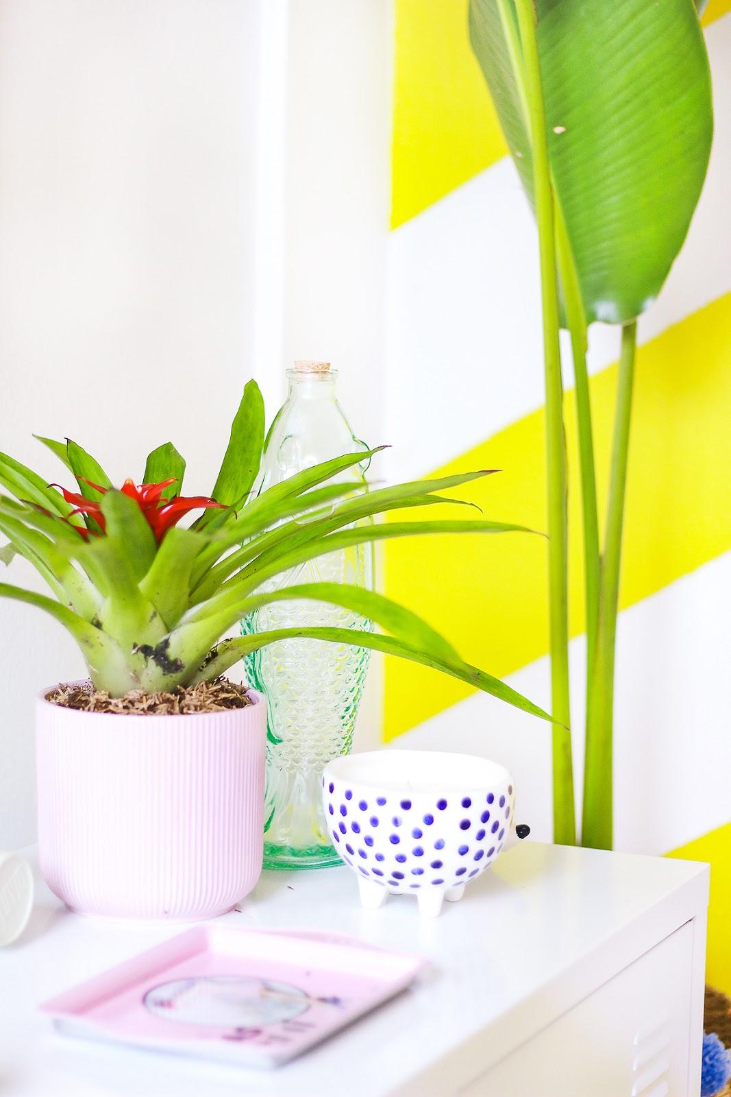 plantas para dentro de casa ravenala bananeira bromelia