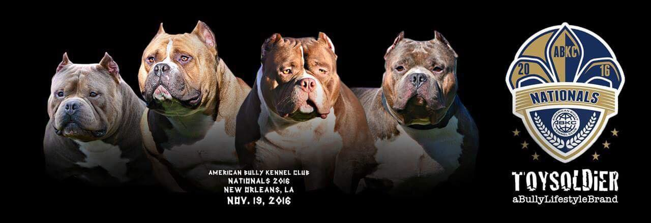 American Micro Bully Puppies Price | American Bully Cost | Venomline