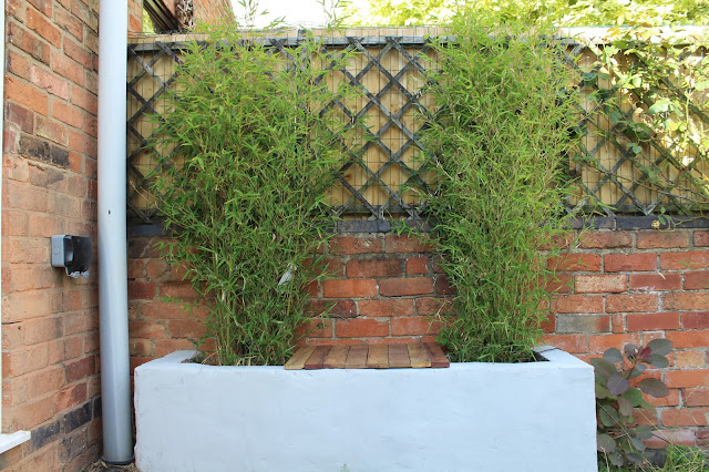 bamboo in brick planter