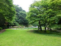 明月院の本堂裏庭園