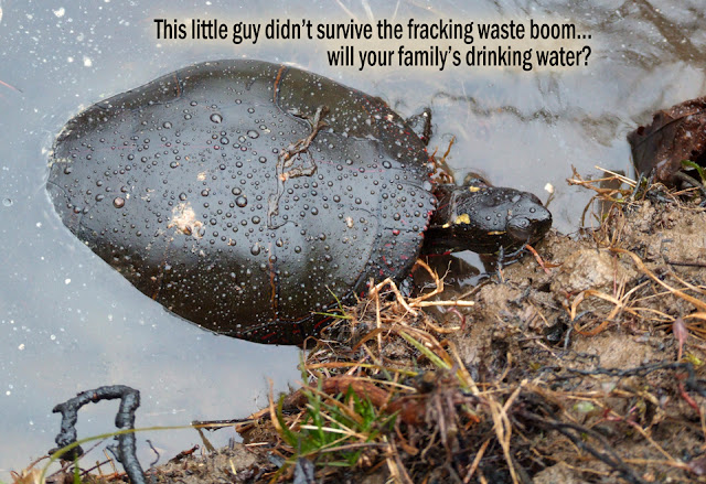 dead turtle floating in fracking injection well waste