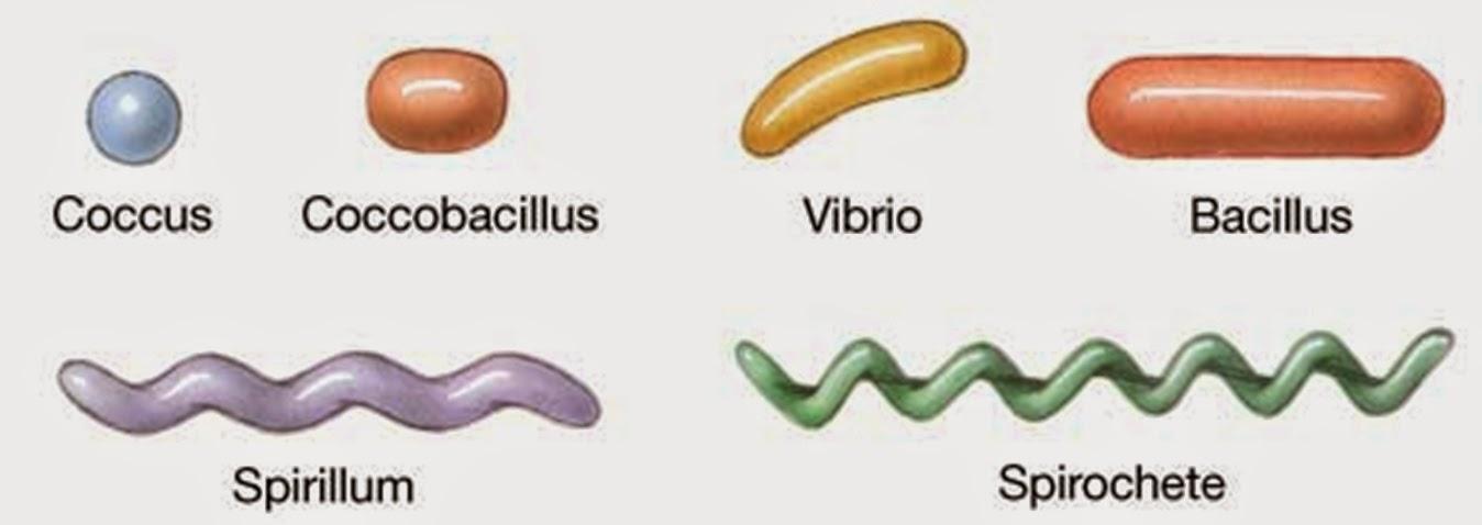 Biology 11 bacteria