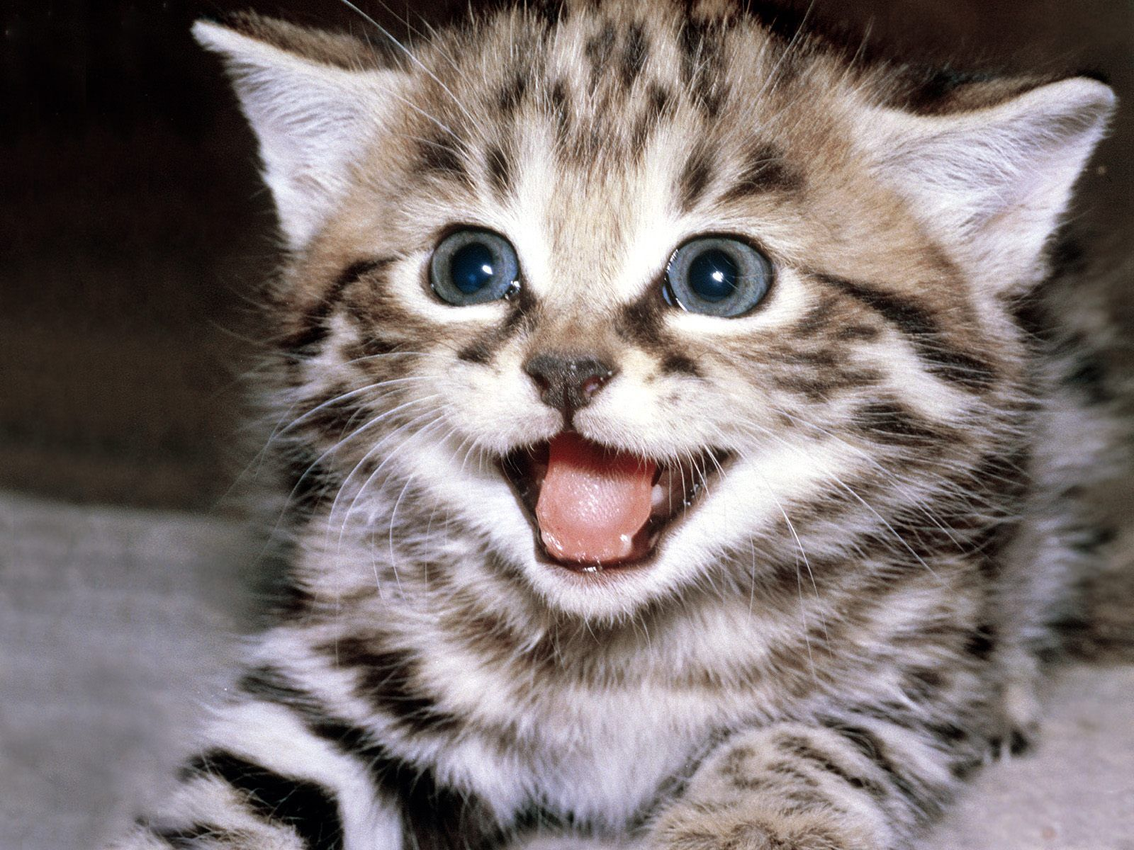 Funny Cats: Funny World Fun Of Web: Funny Cats ,Funny World Fun Of Web