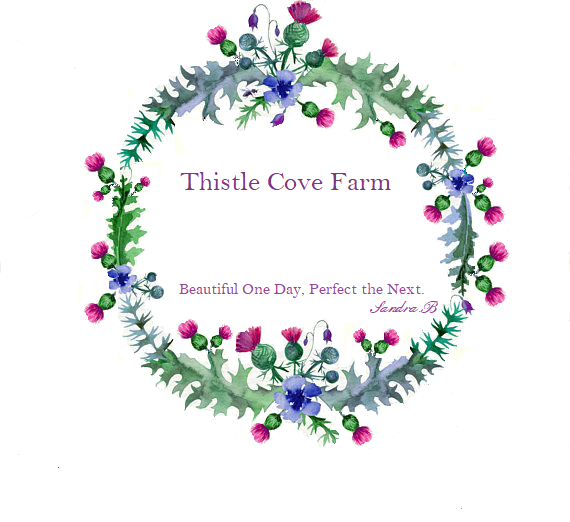 Thistle Cove Farm