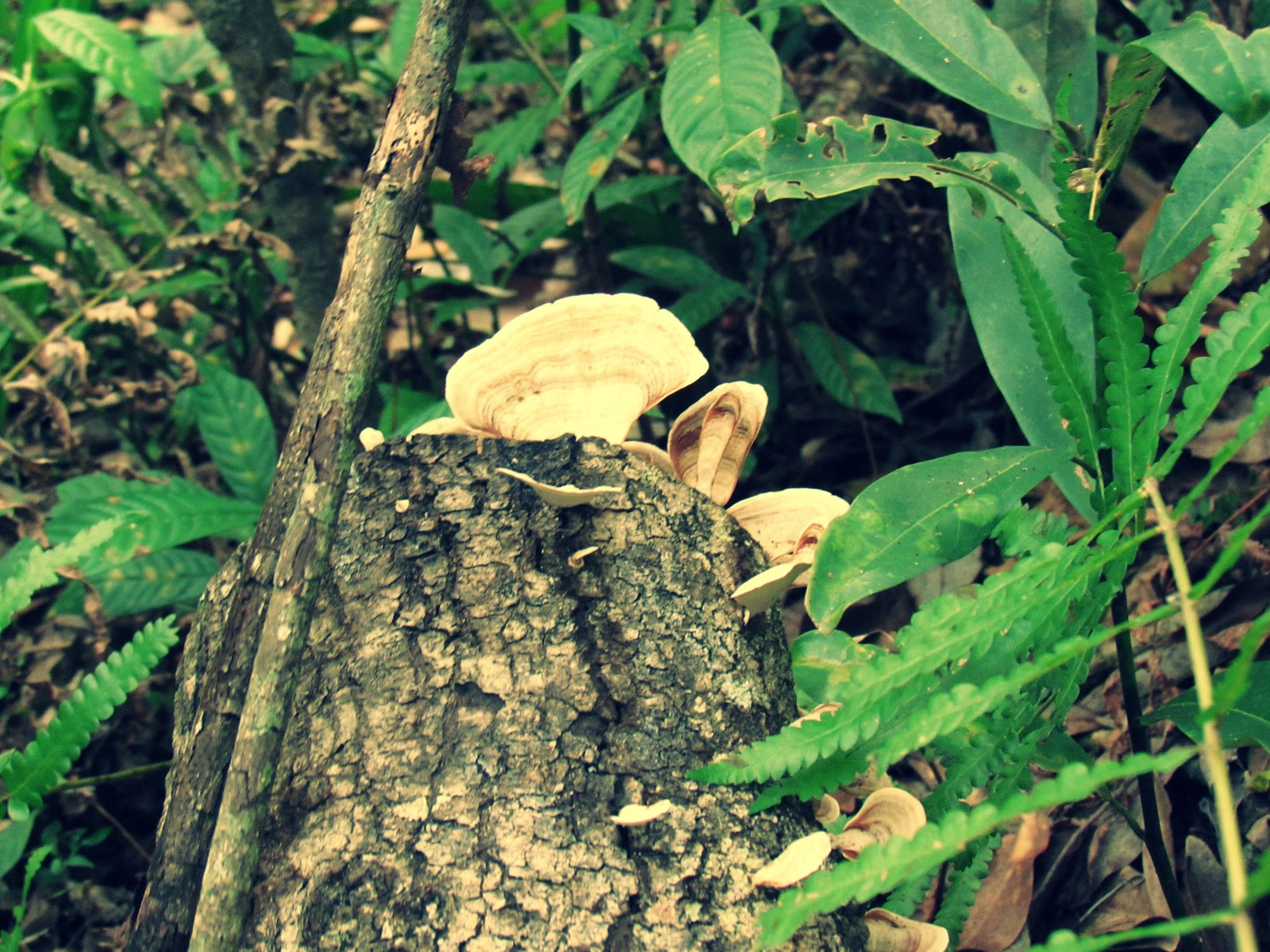 Growing Wildly Edible Mushrooms + Mushroom Picking Florida Living