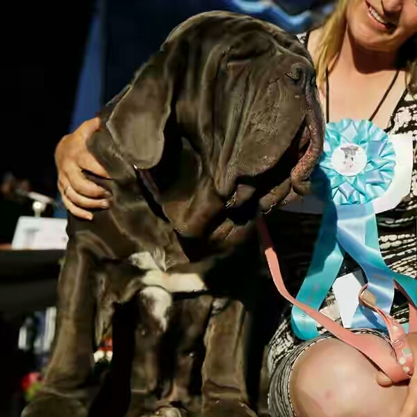 The New World's Ugliest Dog Has Just Been Crowned And Her Name Is Martha