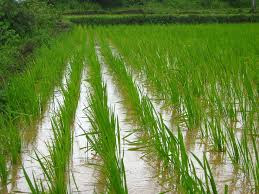Department of Agriculture, Cooperation and Farmers Welfare releases 1st Advance Estimates of production of major Kharif crops for 2018-19