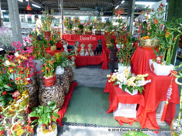 My Nice Garden Chinese New Year 2018 Lucky Plants And Flowers And