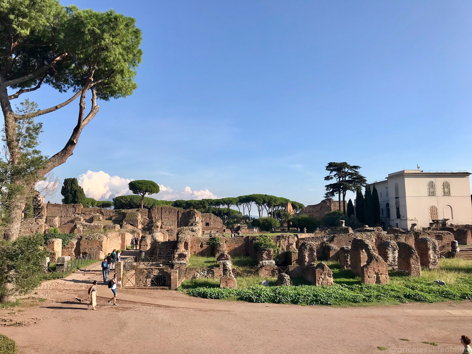 views of the ruins in the Roman Forum