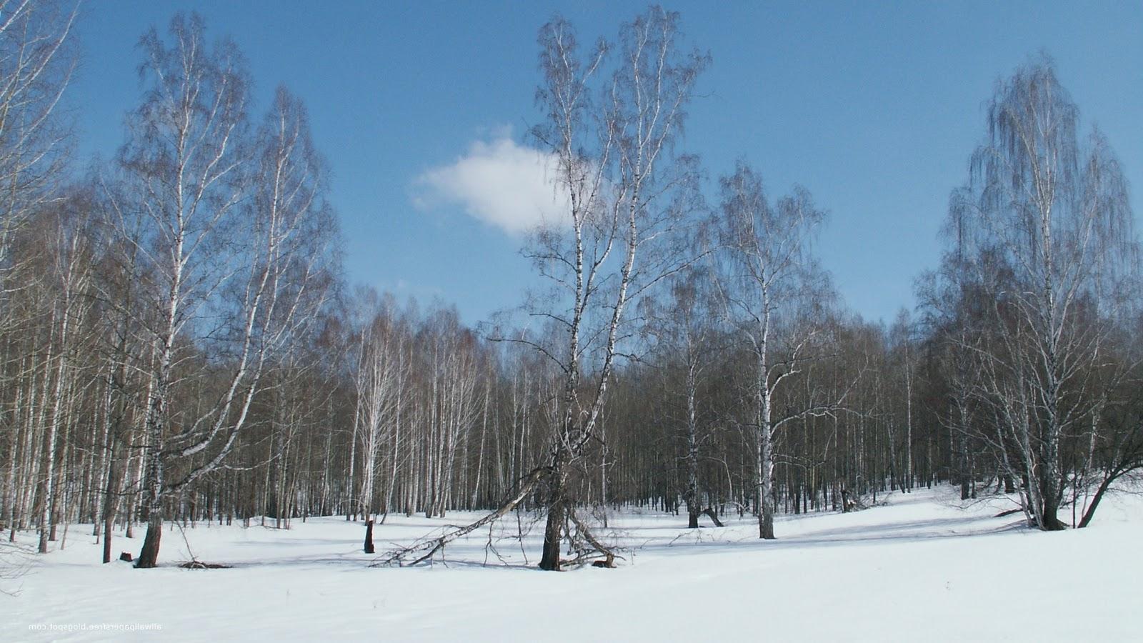s1600 winter achtergronden winter - photo #33