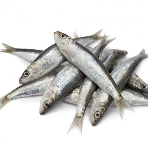 Mathi Fish Price In Chennai