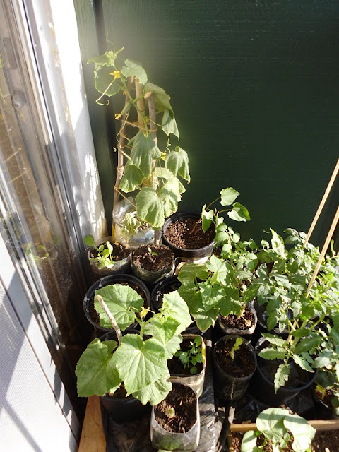 Left side balcony garden closeup