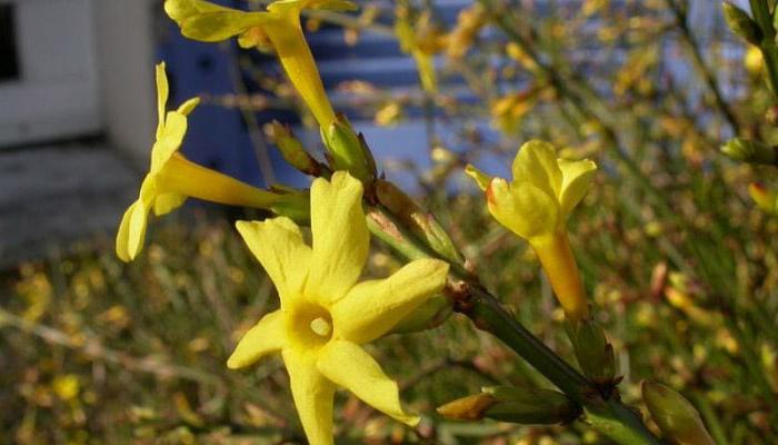 Planta floral para cerco