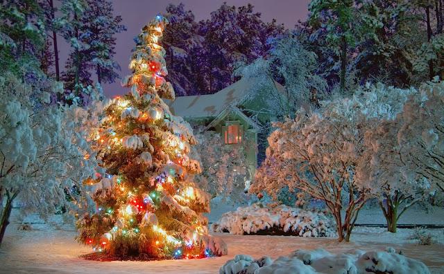 Foto met versierde kerstboom
